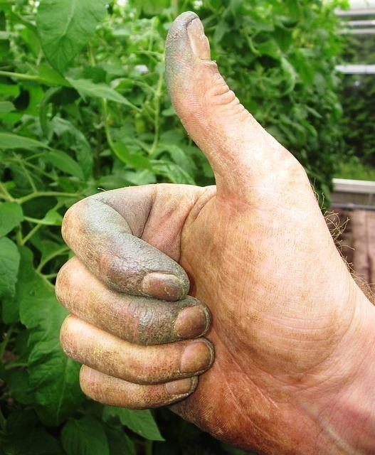 Der Garten-Experte mit dem grünen Daumen