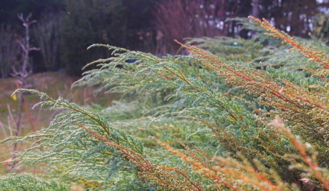 Gartenimpressionen – Wels-Land
