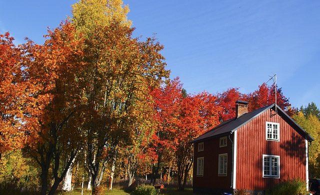 Der Herbst naht – höchste Zeit für die Thujen
